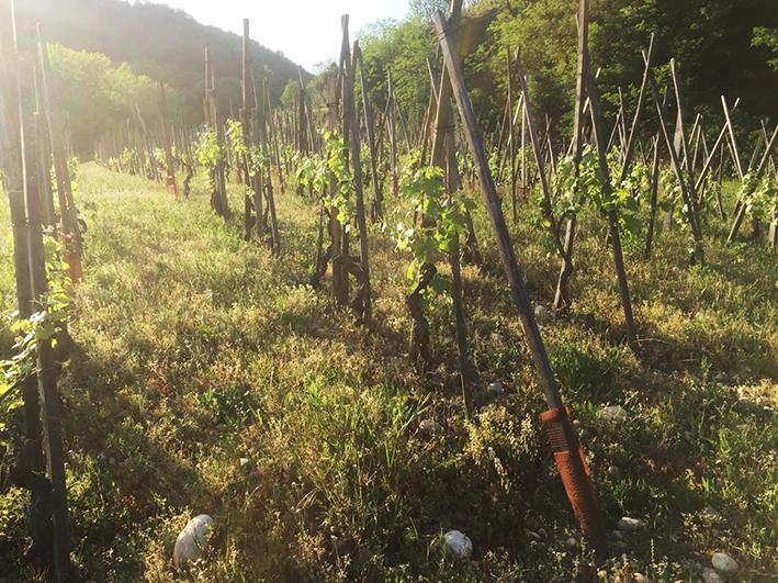 Maison Stéphan - Photgraphie Vignes Forêt