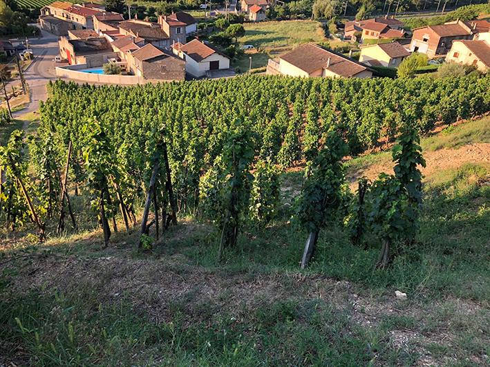 Maison Stéphan - Photographie Vignes Maison